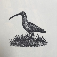 Curlew, wood engraving by Marie Hartley