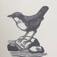 Dipper, wood engraving by Marie Hartley