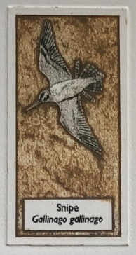 Snipe collagraph, Hester Cox